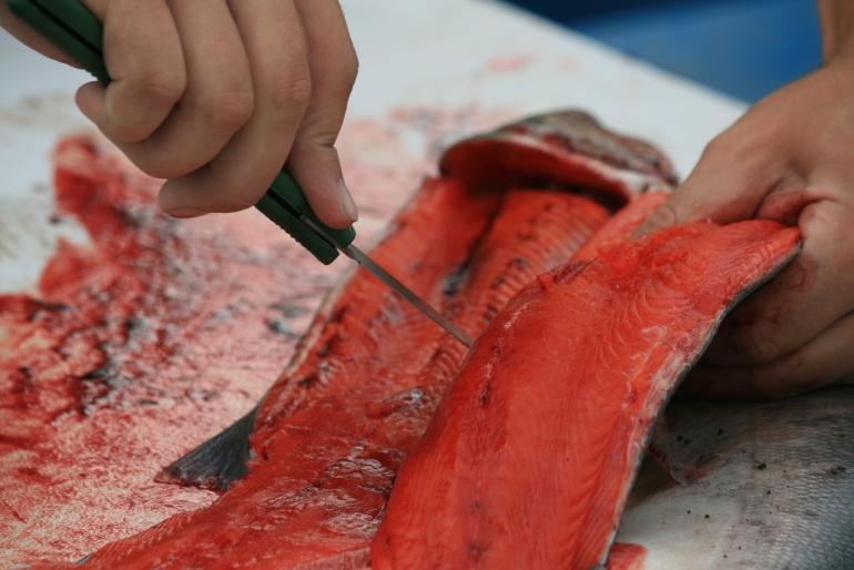 Despiezando salmón recién pescado